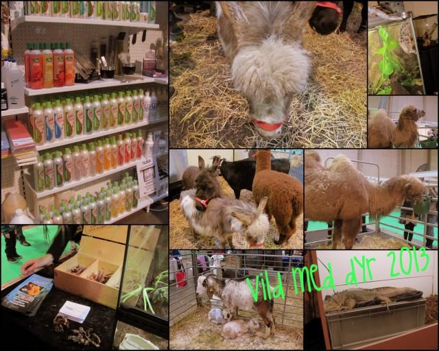 Vild med dyr 2013